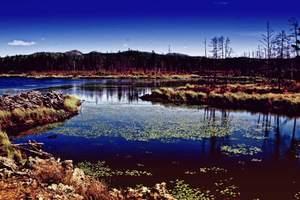 【秋游阿尔山]国家森林公园、奥伦不次、五里泉双飞5日