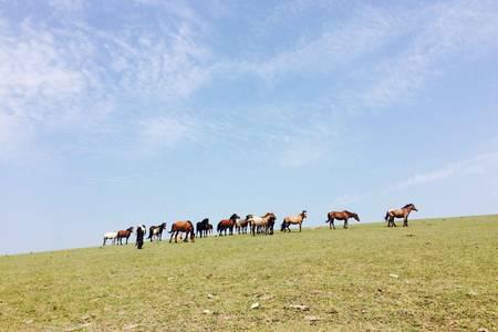 【3天2晚】走进边境草原,参观魅力口岸 呼伦贝尔纯玩3日游
