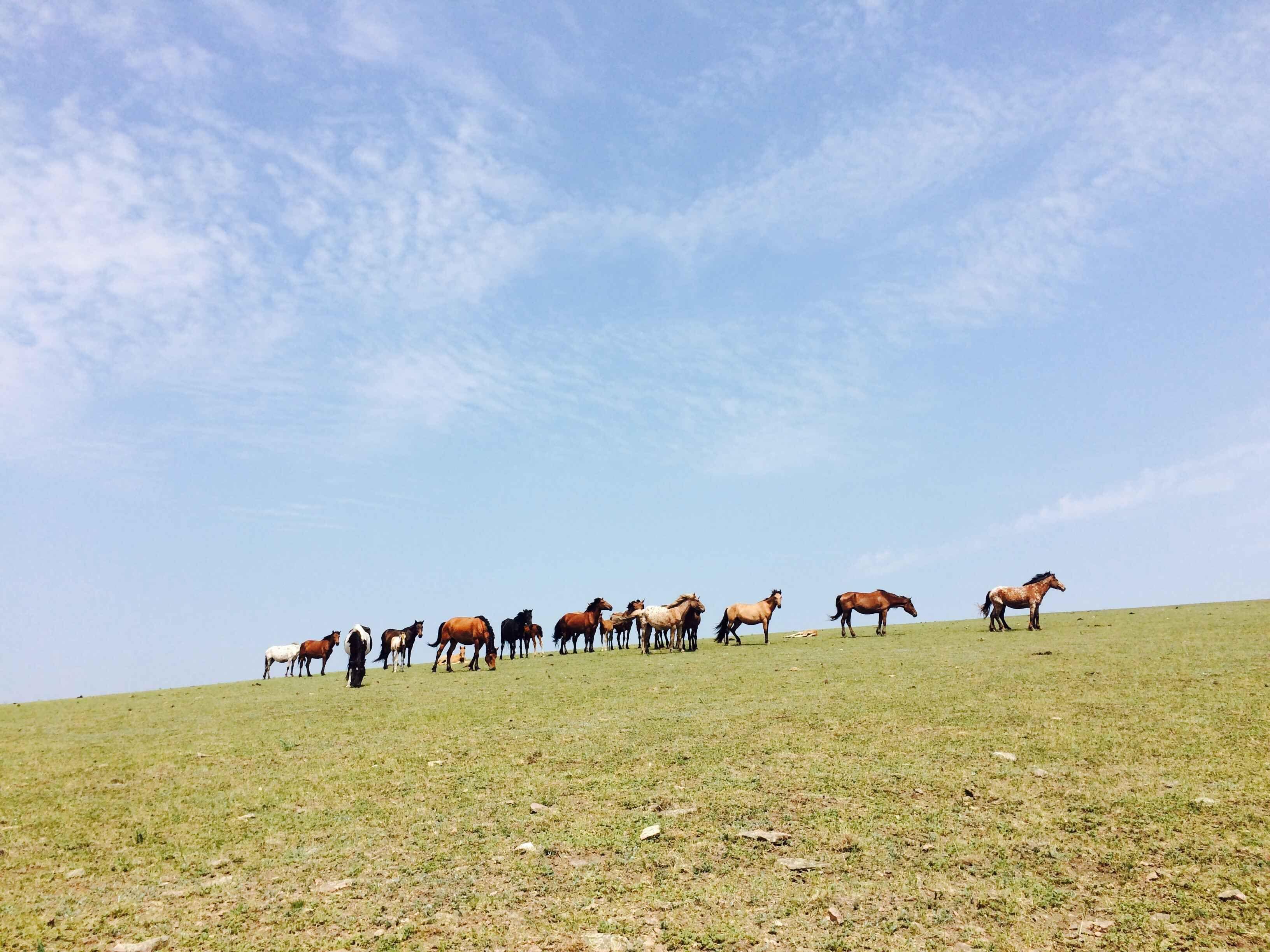 【3天2晚】走进边境草原,参观魅力口岸 呼伦贝尔3日自由行