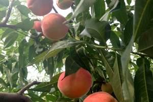 平谷石林峡或京东大峡谷采摘苹果秋季两日游___公司会议两日游