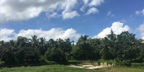 南药植物园