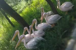 北京大兴野生动物园一日