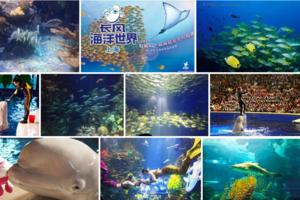 吴江出发到上海长风海洋世界、白鲸水族馆休闲一日游