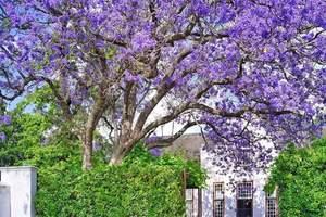 南非旅游玩什么 长春到南非克鲁格国家公园、花园大道精华10日