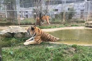 【京郊周边游】北京野生动物园、千灵山风光亲子 经典汽车一日游