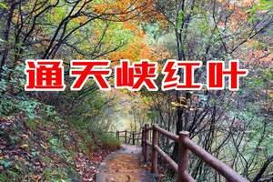 栾川通天峡看红叶门票特价 通天峡红叶怎么样