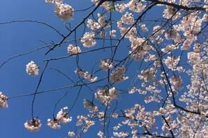 厦门旅行社_【印象之旅】厦门到日本古都巡游6双日