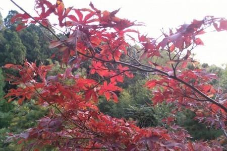 泰安出发到济南红叶谷旅游|浪漫红叶谷一日游|秋季旅游景点