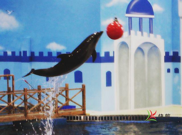 调整大小 海豚修改后