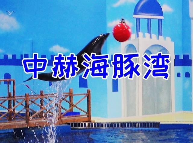 中赫海豚湾宣传