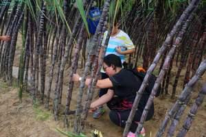 秋游 | 收割稻、打年糕、打地鼠、挖红薯农耕 深圳一日亲子游
