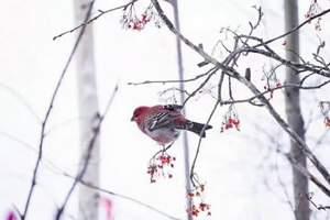 【6天5晚】呼伦贝尔冬季激情滑雪、阿尔山温泉冰雪旅游自由行