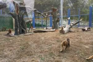 阿城北方森林动物园跟团一日游_动物园门票预定_阿城动物园价格