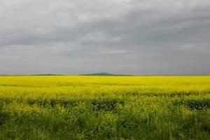 【满洲里进出】草原、阿尔山、满洲里四日游