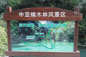 中亚楠木林