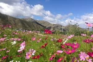 天池、吐鲁番、那拉提、天鹅湖、赛里木湖双卧5日游