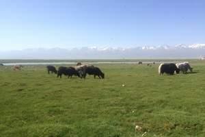 新疆伊犁赛里木湖·巴音·那拉提·独库公路四日<拼车环线纯玩>