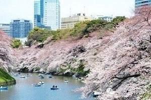 花漾东瀛 - 樱花祭日本双飞6日游  长春起止