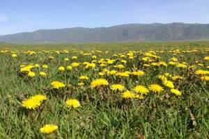 草原旅游推荐泰安到乌拉盖 锡林九曲湾 塔敏查干沙漠双飞5日游