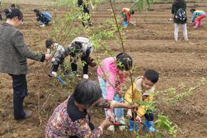 植树节带小朋友去哪植树好呢 亲子植树活动 植树节深圳周边一天