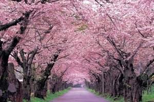 【逛吃武汉】赏樱花纯玩2日游-郑州到武汉2日游汽车团