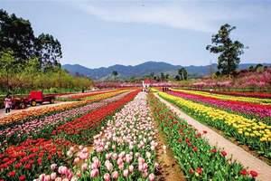 重庆春季旅游23日正式启动 近200项春游主题活动出炉