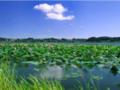 郑州到山东纯玩2日游-微山湖红荷湿地+泰安地下裂谷