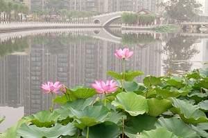 2020北京到白洋淀一日游|白洋淀一日游电话|白洋淀旅游报价