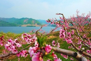 丹东河口桃花一日游_河口桃花节直通车_丹东河口旅游