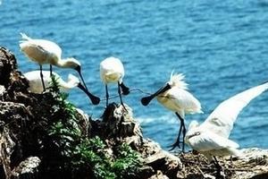 一山双岛—冰峪沟、石城岛、行人坨(鸟岛) 纯玩3日游
