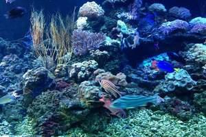 丹东到大连旅游_丹东到大连森林动物园、圣亚海洋世界二日游