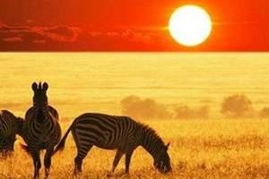 长春起止  肯尼亚纯玩 动物嘉年华10日 动物迁徙季