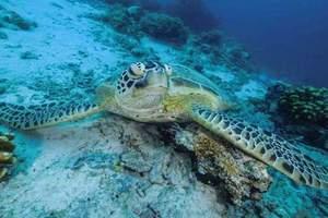 亚博国际版到仙本那自由行 仙本那蜜月7日游 龙门客栈水屋+无限浮潜