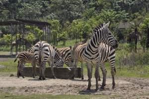 宁波雅戈尔动物园/宁波动物园/成人门票