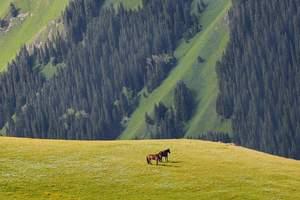 暑假宁波到新疆旅游线路/乌鲁木齐、天池、吐鲁番双飞8日