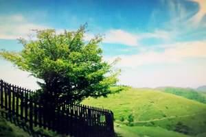 宜昌到百里荒一日游,百里荒怎么样,宜昌百里荒高山草原旅游区