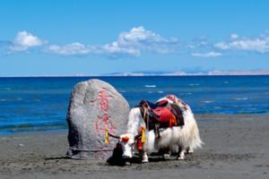 欣欣旅游与青海旅游投资集团签署全域旅游战略合作协议