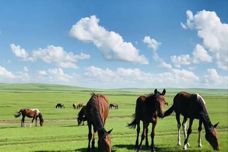 暑假去草原旅游多少钱 辉腾锡勒草原、库布其沙漠、呼和浩特3日
