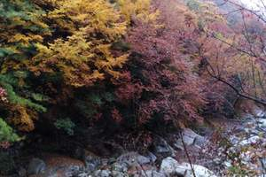 红叶季成都出发到光雾山三日游
