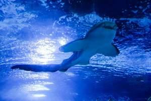 国家海洋博物馆计划于年内向公众正式开放,免费参观!