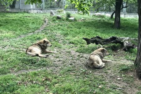 亲子度假之旅:玩转鄂尔多斯野生动物园一日游