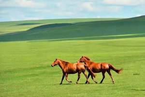 淄博到呼伦贝尔草原、莫尔道嘎、阿尔山双飞8日游(暑假旅游团)