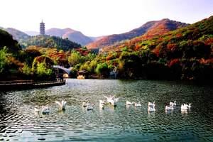 淄博到济南红叶谷一日游 淄博旅行社秋季旅游济南红叶谷一日游