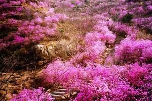 淄博到胶南大珠山登山赏花+灵山湾一日游-淄博到大珠山、灵山湾