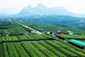 淄博旅游团到青岛平度大泽山葡萄采摘 淄博到青岛大泽山一日游
