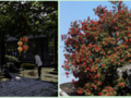 【一价全含·鱼头宴】泰州溱潼古镇+农业生态园一日游
