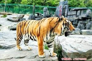 三八节竹海野生动物园门票预订 竹海动物园游玩攻略