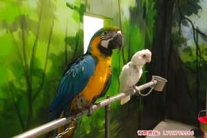 洛阳星际湾动物城门票 建业星际湾室内动物园怎么样