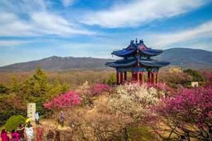淄博去南京梅花山 淄博去南京博物馆 淄博去南京雨花台三日游
