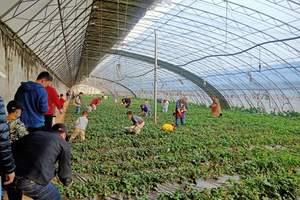 從北京到八大處森林公園踏青+采摘草莓春季團建一日游